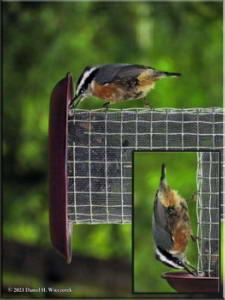 Aug23_11_BirdFeeder_RBNURC