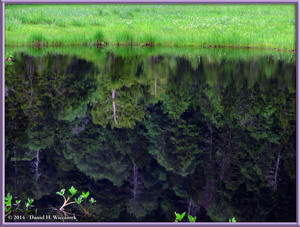Reflection in Water - Oze National Park