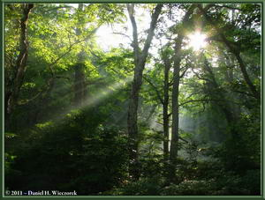 July 17 - Oze National Park - Early Morning Sun Rays (1.0 MB JPG File)