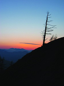 Mountain Tree Snag at Sunset - Mt. Kumotori, May 2004 (572 KB JPG File)