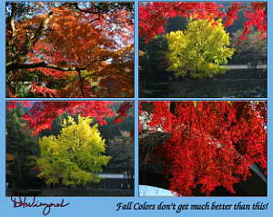 Fall Colors Along the Tama River at Mitake, 4-Picture Collage, Nov 2007 (1.6 MB JPG File)