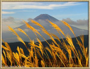 Oct 23 at Owakudani - Mt. Fuji through the grass