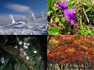 Winter, Spring, Summer, Fall - A Collage, Jan. 2007 (902 KB JPG File)