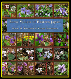 Some Violets of Eastern Japan