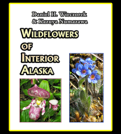 Wildflowers_of_Interior_Alaska