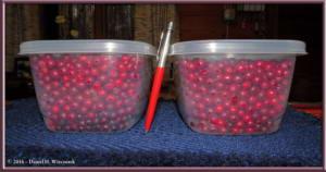 Sep18_28_LingnonberriesRC